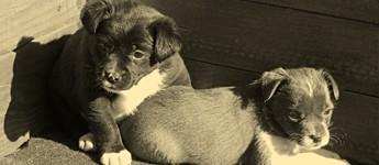 Общински приют за безстопанствени кучета