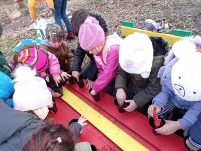 Община Бургас получи над 20 000 семена от явор, смърч и кестен