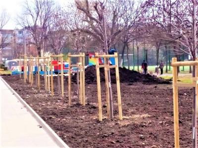 """Засадиха 20 дървета до бл. 62-64 в """"Изгрев"""""""