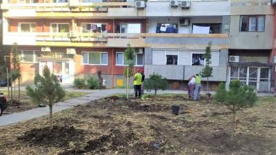 Общината засажда 100 млади дървета в междублокови пространства